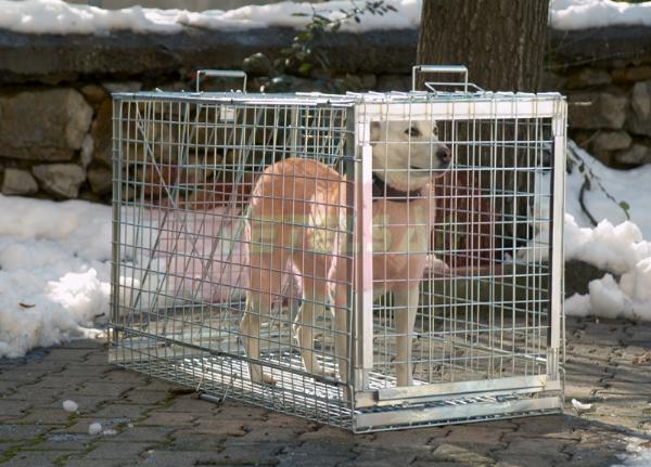 Köpek Yakalama Kafesi