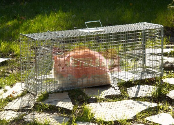 Kedi Yakalama Kafesi